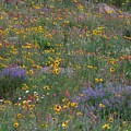 Wildflowers Abundance by George Tuffy