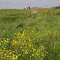 Wildflowers At Cape Spear by Terese Loeb Kreuzer