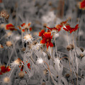 Wildflowers Of The Dunes by DigiArt Diaries by Vicky B Fuller