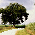 Wind Motif Old Dam Road by RC DeWinter