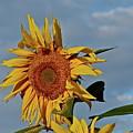 Windblown by Diana Hatcher