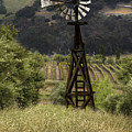 Windmill And Vineyards by Karen  W Meyer