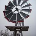 Windmill Frost by Sara Stevenson