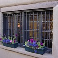 Window Decor by Mary Rogers