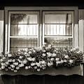 Window Flower Box 2 by Joanne Coyle