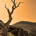 Windswept by Shari Jardina