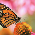 Winged Beauty by Doris Potter