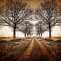 Winter Avenue by Meirion Matthias