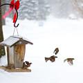 Winter Birds by Tim Fitzwater