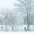 Winter Chill by Jutta Maria Pusl