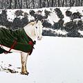 Winter Coat by Ben Watson III