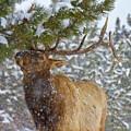 Winter Edibles by Crystal Garner
