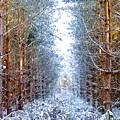 Winter Path by Svetlana Sewell