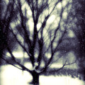 Winter Tree 3 by Perry Webster