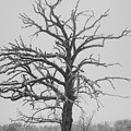 Winter Tree by Keith Gray