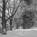Winter Wonderland by Nancie DeMellia