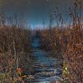 Wolf Road Prairie Trail by Steve Gadomski