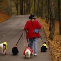 Woman Walks Her Army Of Dogs Dressed by Raymond Gehman