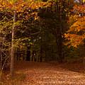 Wonderful Fall Colors by Robert  Torkomian