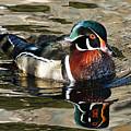 Wood Duck 1 by Ernie Echols