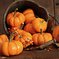 Wooden Bucket Filled With Tiny Pumpkins by Sandra Cunningham