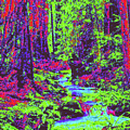 Woodland Forest D4 by Modified Image