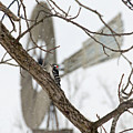 Woodpecker And Windmill by David Arment