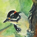 Woodpecker by Stephanie Allison