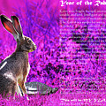 Year Of The Rabbit 2011 . Magenta by Wingsdomain Art and Photography