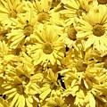 Yellow by Alan Skonieczny