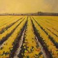 Yellow Daffodil Glow by Sylvia Carlton