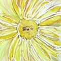 Yellow Daisy Portrait by Barbara Pearston