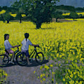 Yellow Field by Andrew Macara
