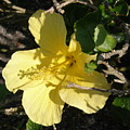 Yellow Flower In The Shade by Alice Markham