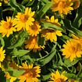 Yellow Flowers by Dennis Stein