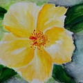 Yellow Hibiscus by Jamie Frier