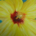 Yellow Hibiscus by Melinda Etzold