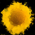 Yellow Hope by Khalid Saqr
