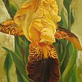 Yellow Iris by Alfred Ng