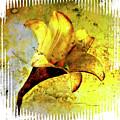 Yellow Lily by Bernard Jaubert