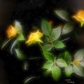 Yellow Roses by Carola Ann-Margret Forsberg