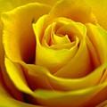 Yellow Tea by Rhonda Barrett