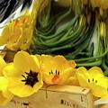 Yellow Tulips by Bernard Jaubert