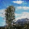 Yucca Glow  by Paul Tokarski