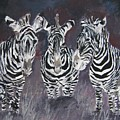 Zebra Oil Painting by Derek Mccrea