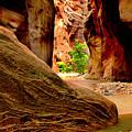 Zion Canyon by Matthew Altenbach