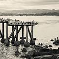 Cannery Row Monterey Ca I Toned by David Gordon