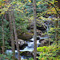 Forest Stream Cascades by Debra and Dave Vanderlaan