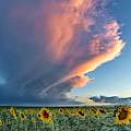 Sunflowers And Storm Clouds II by Rand