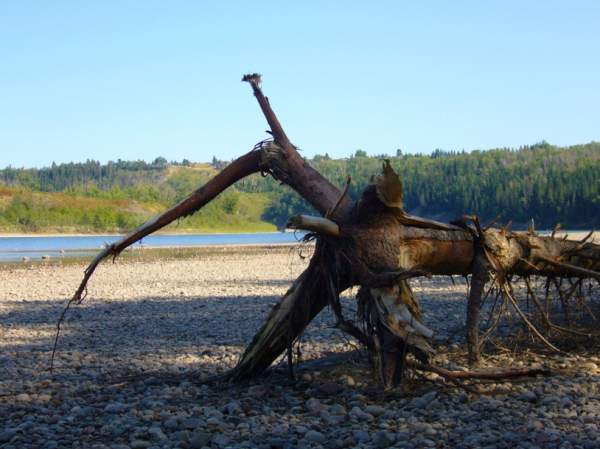 Canadian Driftwood